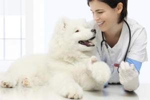 Клинический анализ крови у собаки