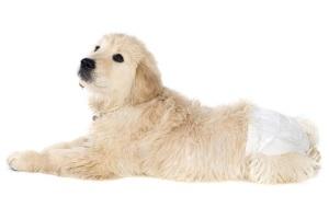 Цистоскопия собаки