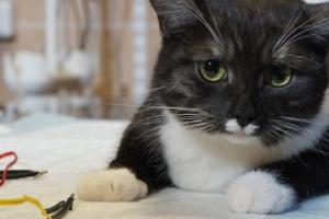 Кошка на физиотерапии