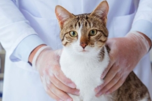 Гастроскопия кошке