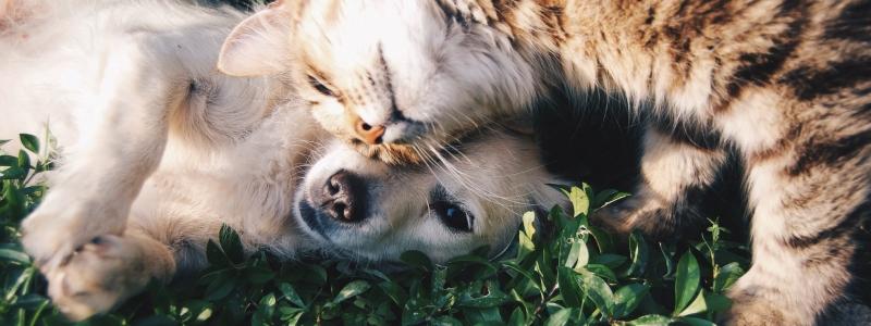 Кастрированные домашние животные