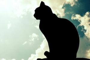 Прощание с кошкой