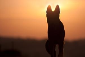 Прощание с собакой