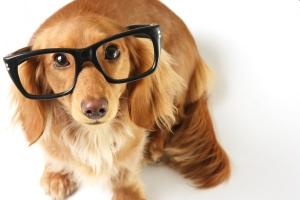 Собака у офтальмолога
