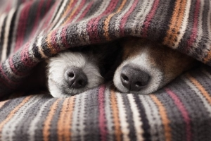 Лечение носа собак (риноскопия)