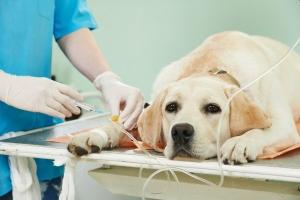 Лечение собаки в стационаре