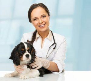 Собакак у ветеринара