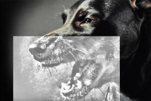 Стоматологический рентген собаке