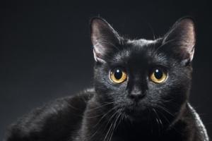 Усыпление кошки