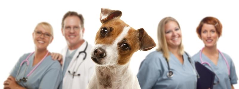 Ветеринары для собак