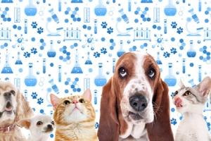 Анализы кошкам и собакам
