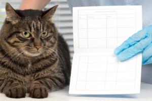 Ветеринарный паспорт кота