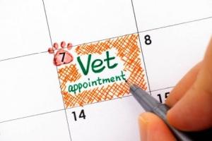 Запись к ветеринару