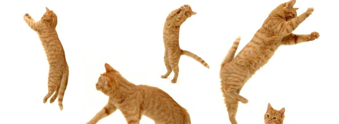 Активный кот без защимления нерва