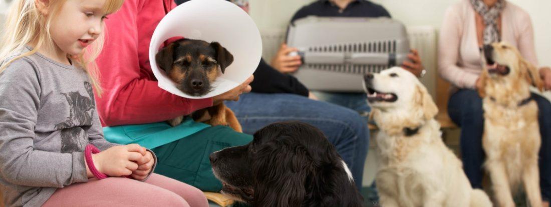 На прием к ветеринару в клинике