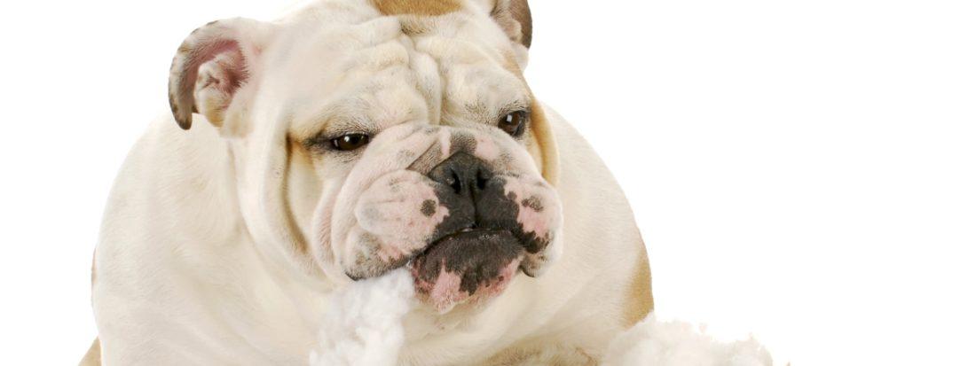 Собака съела несъедобное - инородный предмет