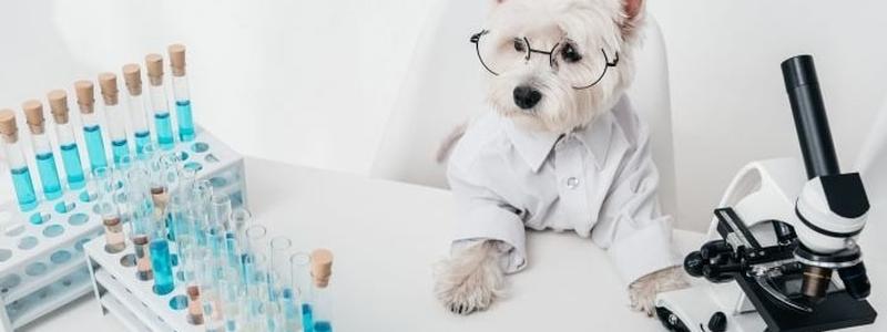 Анализы для собаки