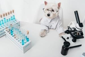 Анализы для собак