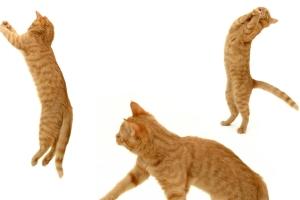 Кот без защемления нерва