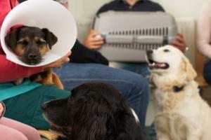 В приемной у ветеринара