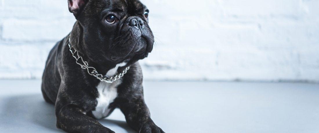 Проблемы с задними лапами у собаки