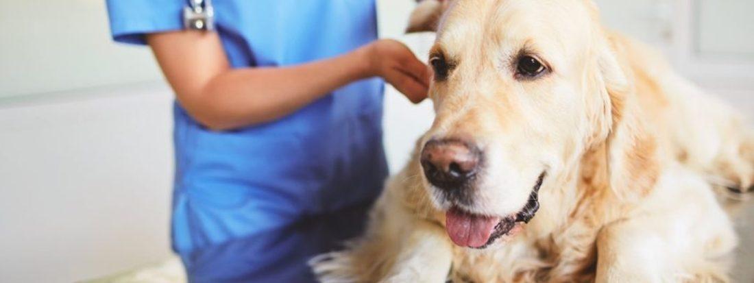 Колоноскопия собаки