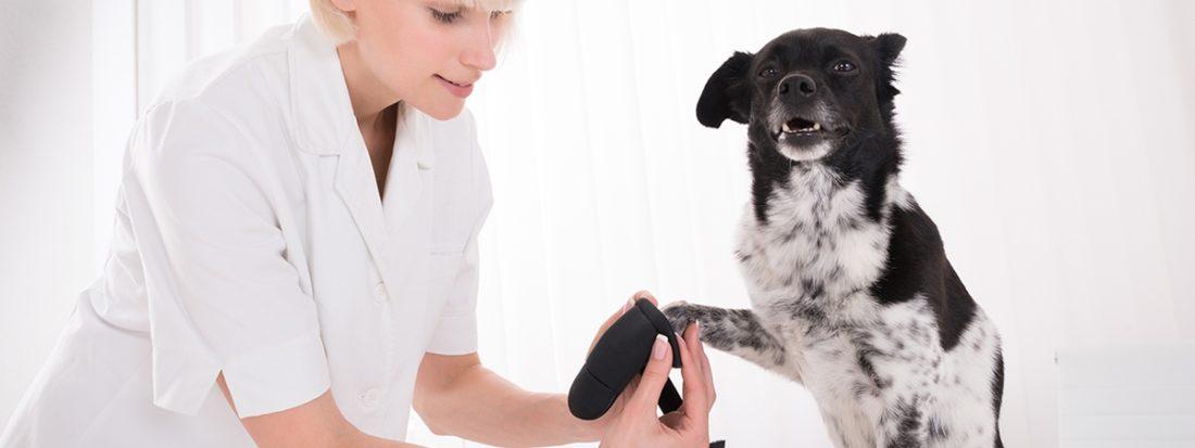 Лечение перелома лапы собаки
