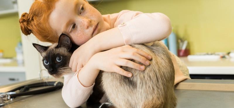 Больная кошка с хозяином на приеме у ветеринара