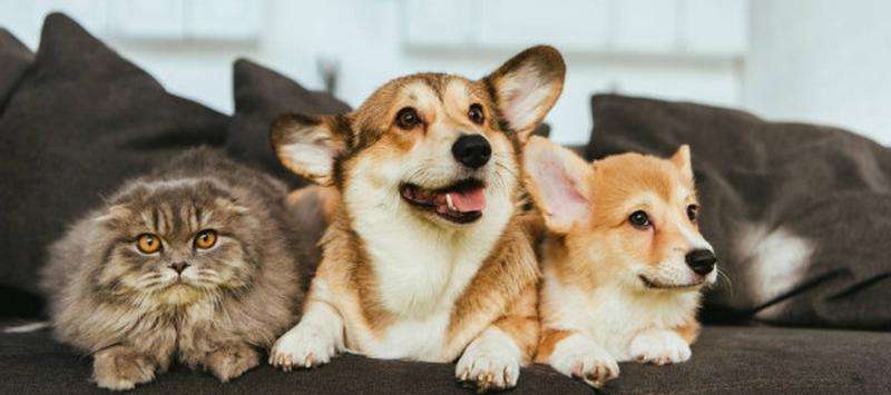 Домашние кастрированные кот и собаки