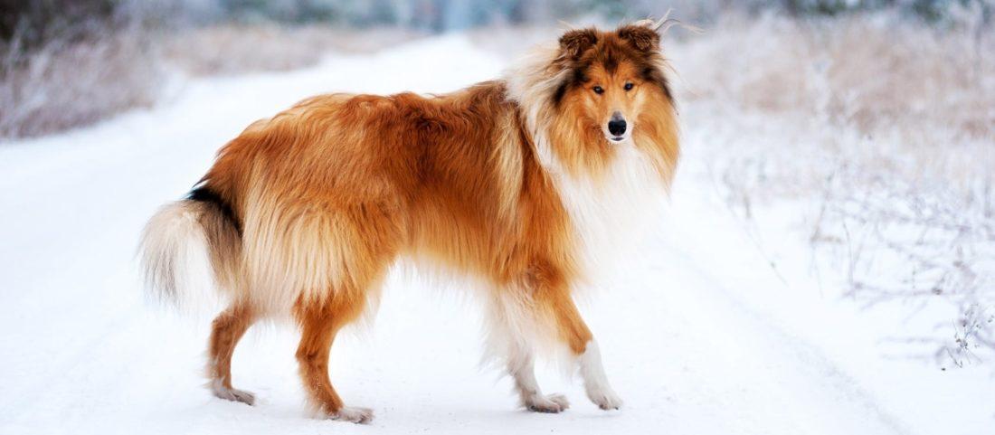 Собакак с больной поджелудочной железой