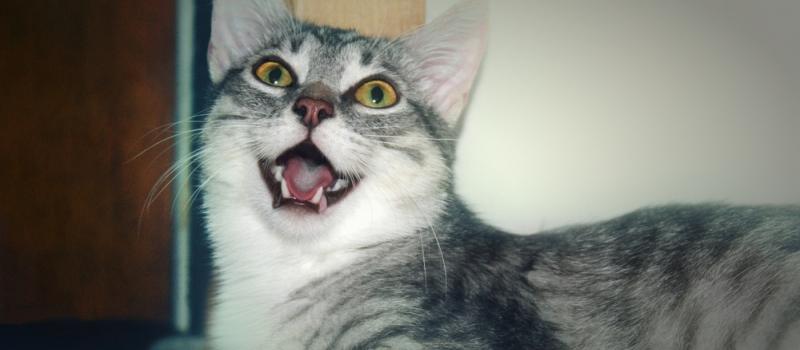 Тяжелое дыхание у кошки с хрипом