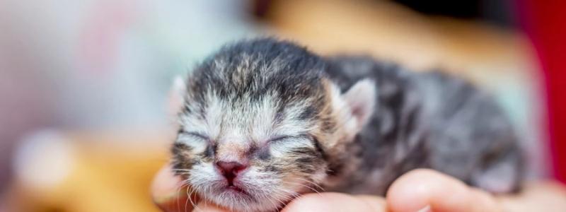 Новорожденный котенок в ветеринарной клинике