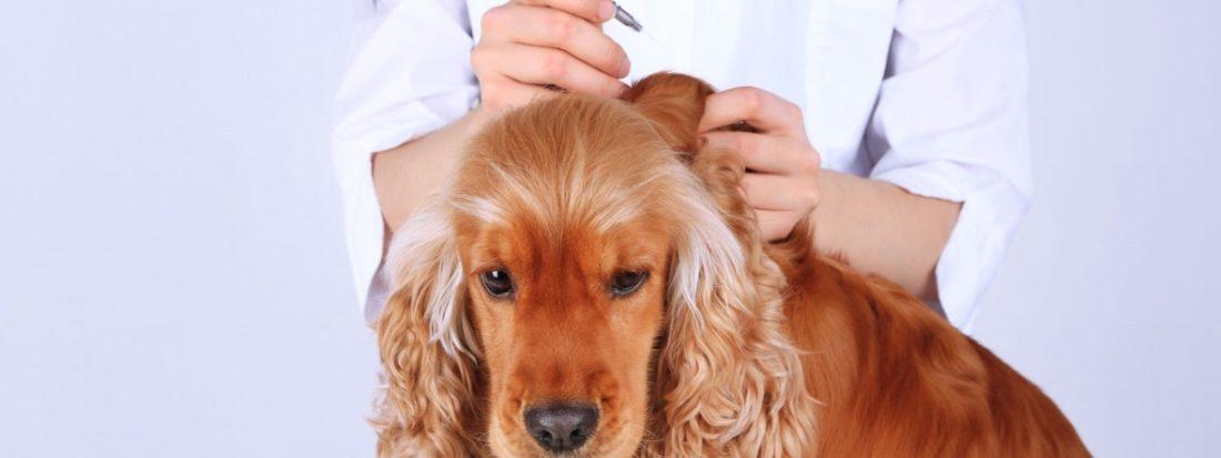Прививка Нобивак собаке