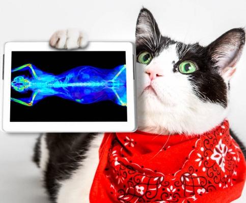 Проверка онкологических заболеваний у кошки
