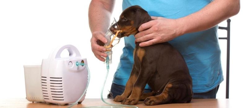 Собака с заболеванием легких дышет через ингалятор